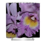 Orchid 234 Shower Curtain