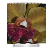 Orchid 85 Shower Curtain