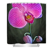 Orchid And Buds Shower Curtain