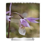 Orchid Calypso Bulbosa - 1 Shower Curtain