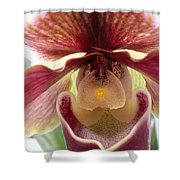 Orchid Interior Shower Curtain