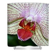 Orchid Close Up Shower Curtain
