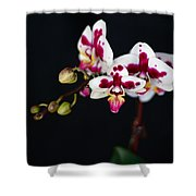 Orchid Flowers Against Black Background Shower Curtain