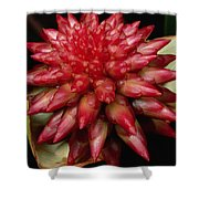 Orchid From The Autana Tepui Shower Curtain