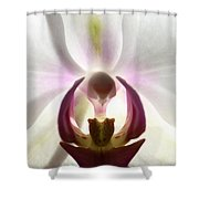 Orchid Heart 2 Shower Curtain