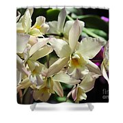 Orchid Iwanagara 9854 Shower Curtain