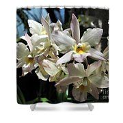 Orchid Iwanagara 9894 Shower Curtain