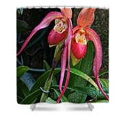 Orchid Mysteries Shower Curtain