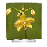 Orchid Number 1 Shower Curtain