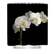 Orchid On Black Shower Curtain