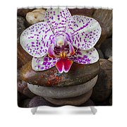 Orchid On Stack Of Rocks Shower Curtain