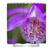 Orchid Pleione Bulbocodioides Flower Shower Curtain