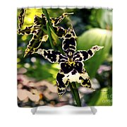 Orchid Study Shower Curtain