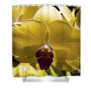 Orchid Study Vi Shower Curtain