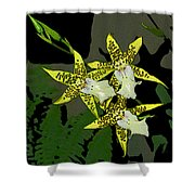 Orchid Trilogy Shower Curtain