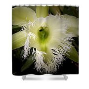 Orchid With Feathery Ends Shower Curtain