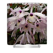 Orchids Beauty Shower Curtain
