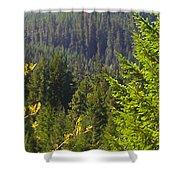 Oregon Trees Shower Curtain