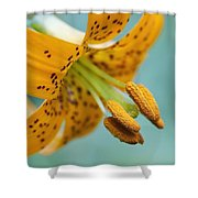 Oregon, United States Of America A Lily Shower Curtain