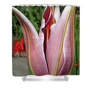 Oriental Lily Named La Mancha Shower Curtain