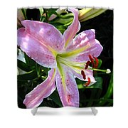 Oriental Lily Named Tom Pouce Shower Curtain