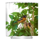 Oriole And Babies Shower Curtain