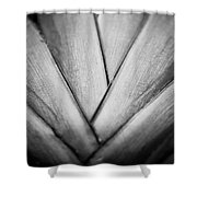 Ornamental Palm Shower Curtain