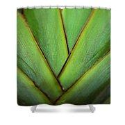Ornamental Palm Detail Shower Curtain