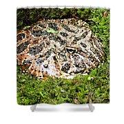 Ornate Horned Frog Shower Curtain