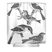 Ornithology, 19th Century Shower Curtain