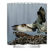Osprey 2 Shower Curtain