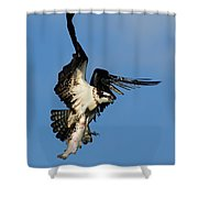 Osprey And Rainbow Trout Shower Curtain