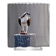 Osprey And Sushi Shower Curtain