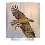 Osprey Catches Big Fish Shower Curtain