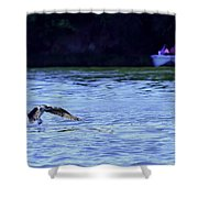 Osprey Cleaning The Lake  Shower Curtain