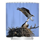 Osprey Coming In For A Landing Shower Curtain