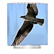 Osprey I Shower Curtain