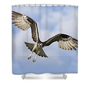 Osprey In Flight One Shower Curtain