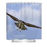 Osprey In Flight Two Shower Curtain