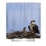 Osprey Mother And Chick Shower Curtain