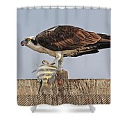 Osprey With Catch Shower Curtain