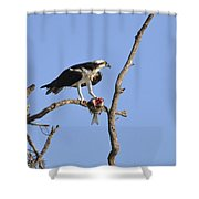 Osprey With Catch II Shower Curtain