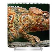 Oustalets Chameleon Furcifer Oustaleti Shower Curtain