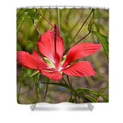 Outstandishly Shower Curtain