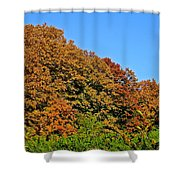 Over The Hedge Shower Curtain