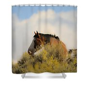 Over The Hill Pinto Shower Curtain