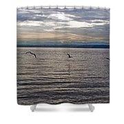 Owen Beach Shower Curtain