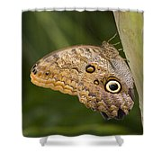 Owl Butterfly Caligo Idomeneus Resting Shower Curtain