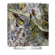 Owl Eye Shower Curtain