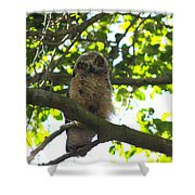Owl In Central Park Shower Curtain